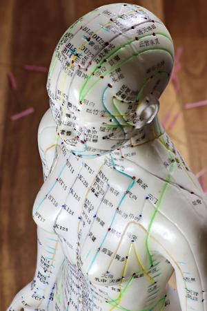 modelo de acupuntura femenina en el escritorio
