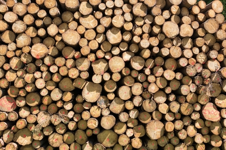 boles: stacked logs for background use