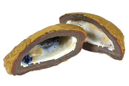 boulder opal nut from Australia isolated on white background
