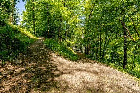 u-turn path through the woods