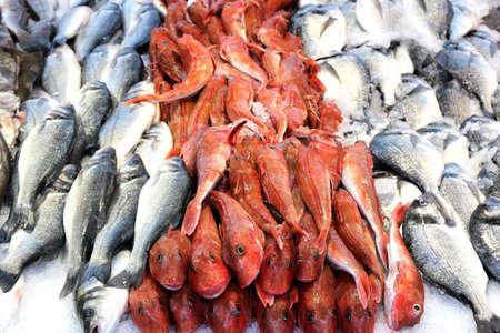 assortment of fresh fishes at fishmonger Standard-Bild
