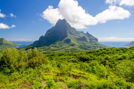 Tropical Vegetation against a Blue Sky, Island of Moorea, French Polynesia