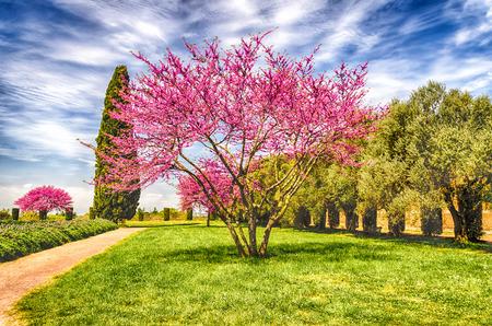 Mooie Italiaanse tuin met bloemen kersenbomen, cipressen en olijfbomen