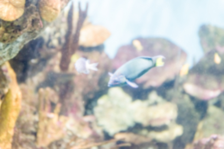 Fond défocalisé avec des poissons tropicaux dans l'environnement de l'aquarium. Post-production intentionnellement floue pour l'effet bokeh Banque d'images