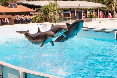Three beautiful dolphins jumping in a swimming pool showing their acrobatic abilities Stock Photo