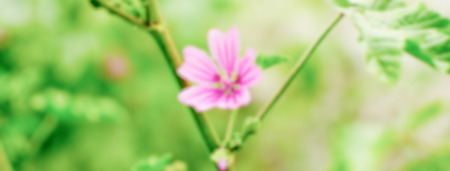Defocused background of a purple wild flower on a green field. Intentionally blurred post production for bokeh effect