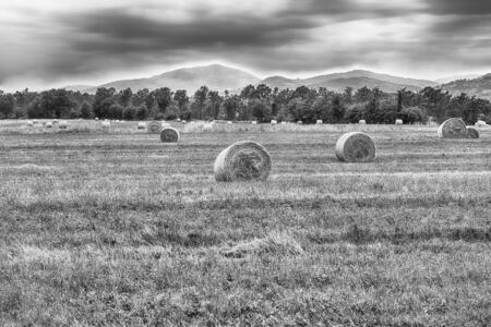Hay bales on the field after harvest, countryside landscape in Italy Фото со стока