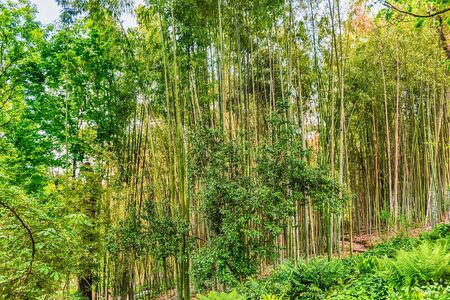 Background with foliage pattern of bamboo trees in a grove or forest