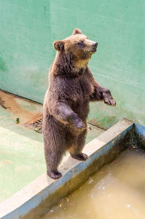 Brown bear waiting for food at the zoo Banco de Imagens