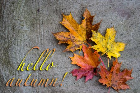 Postcard with multicolored maple leaves with inscription Hello Autumn