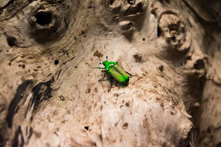 Vivid colourful and big insect sits on a light and textured tree bark. Banco de Imagens