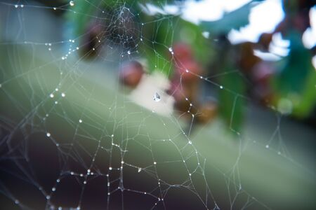 Crystal clear water drops on a spider web after rain on a blurred background.