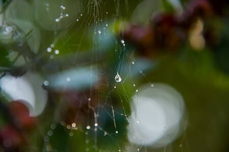 Crystal clear water drops on a spider web on a blurred background.
