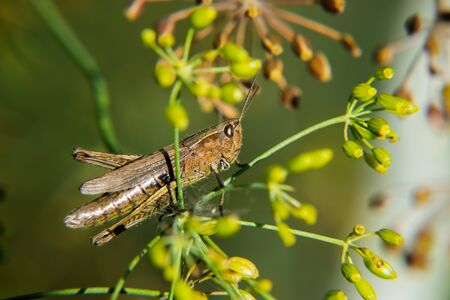 Grasshopper is sitting on a green grass. Banque d'images