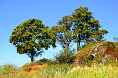 Landscape of bright green trees and the clean blue sky