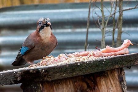 Close up of a bird eating seeds. Nature wildlife scene. Banco de Imagens