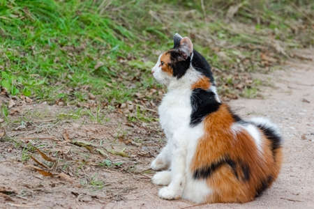 Cat is sitting and looking on something with interest. Banco de Imagens