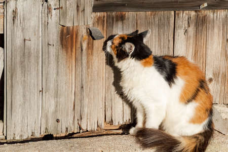 Cat is sitting and smelling something on the wood wall. Banco de Imagens