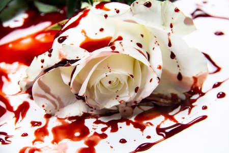 Schöne und blutige weiße Rose auf dem weißen Hintergrund. Blutige Rose - Konzeptfoto. Weiße Rose mit Blut.