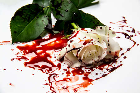 Beautiful and bloody white rose on the white background. Bloody rose - conceptual photo. White rose with blood.