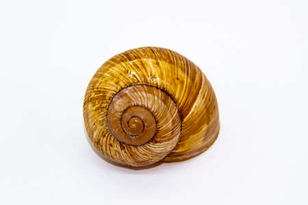 Empty shell of a snail against white background. Snail shell isolated on white