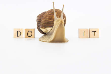 Beautiful grape snail move between wooden cubes. On cubes written words DO IT