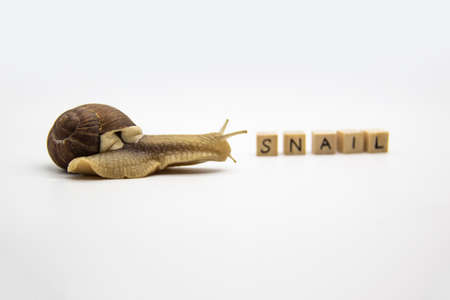 Beautiful grape snail move to wooden cubes. On cubes written word SNAIL Imagens - 155667076