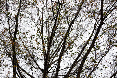 Autumn trees branches of gray sky in cloudy autumn weather.