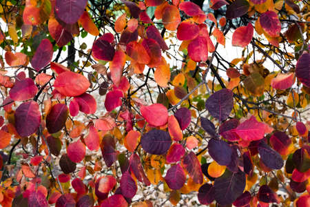 Colorful leaves on the tree can be used for background Imagens