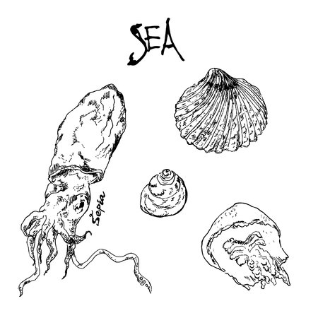 Hand drawn ink pen collection of sea shells, jellyfish, sepia octopus and lettering. Illustration