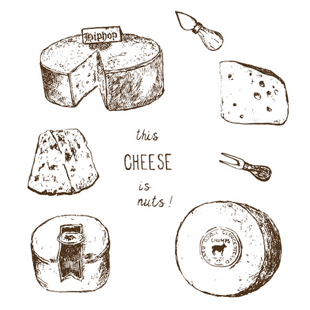 Cheese collection. Vector hand drawn illustration of cheese types . Sketch isolated on white