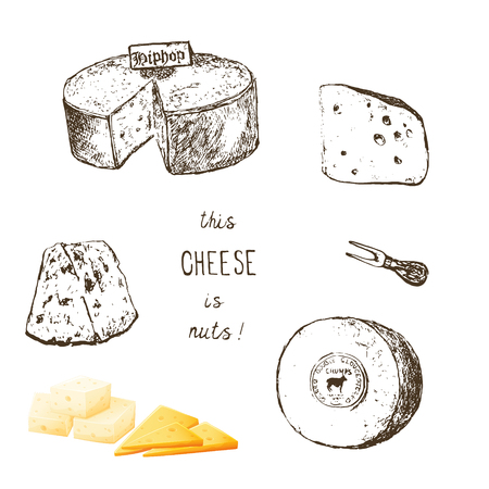 Variety of cheese sorts. Hand drawn illustration of cheese types . Sketch isolated on white and colored vector for menus and stickers