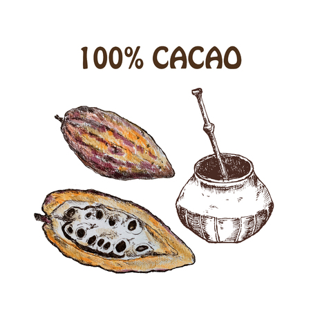Hand drawn sketch cocoa chocolate product set. Vintage illustration of natural healthy food