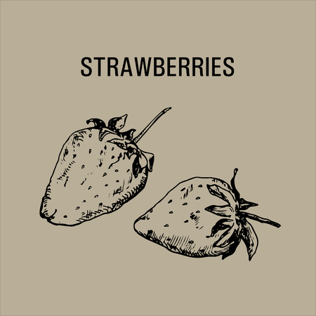 Ink pen illustration with hand drawn strawberries in vintage style