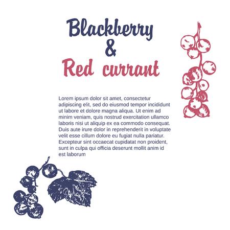 Wild berry drawing. Hand drawn vintage vector frame. Summer fruit set of cranberry, blueberry. Detailed organic food template for menu, jam label, tea banner Ilustração