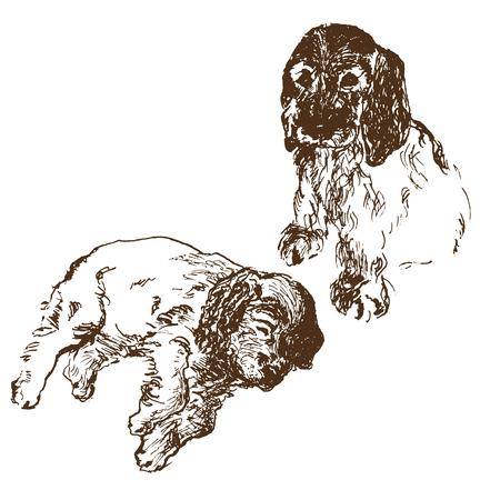 Two english spaniel puppy dog sitting and lying down. Hand drawn vector llustration. Realistic sketch.