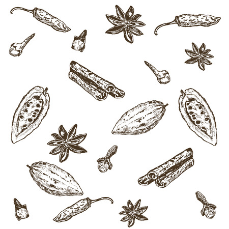 Hand drawn seamless pattern of spices set. Hot pepper, cardamon, anise star, cinnamon, cocoa bean and cloves. Spices vector illustration isolated on white background.