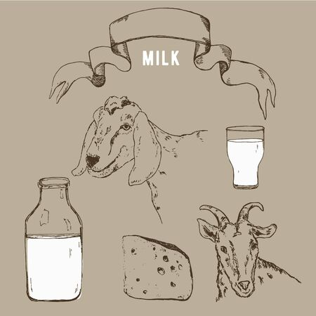 Vector image of goat, goat milk bottle and vintage banner. A set of agricultural illustrations in the style of engraving for milk farm emblem.