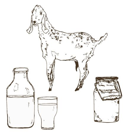 Vector image of goat, goat milk bottle, milky can and vintage banner. A set of agricultural illustrations in the style of engraving for milk farm emblem. Ilustração
