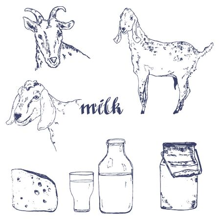 Vector image of goat, cheese, goat milk bottle and vintage banner. A set of agricultural illustrations in the style of engraving for milk farm emblem.