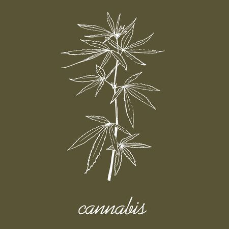 Cannabis leaves and stem sketch vector pattern. Go green and use eco cannabis material. Ecological hand drawn illustration of eco plant. Ilustração
