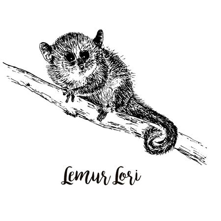 Lemur Loris on a tree vector illustration, hand drawn sketch, black and white. Ink pen cute lori chinese animal sitting on a tree.