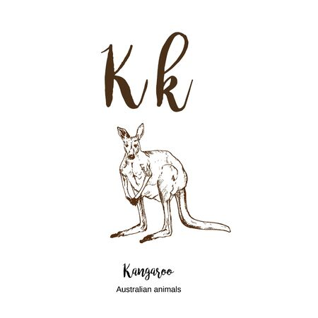 Kangaroo, A to z, alphabet sketch australian animals drawing vector illustration. Vintage hand drawn with lettering. Ready for print paper ratio vector art. Letter K for kangaroo. ABC. Çizim