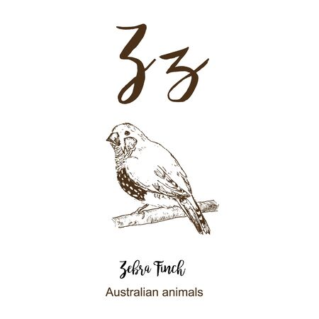Zebra finch bird, A to z, alphabet sketch australian animals drawing vector illustration. Vintage hand drawn with lettering. Ready for print. Letter Z for Zebra finch bird. ABC hand drawning.