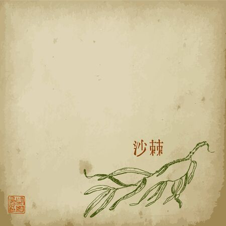 Virginia creeper plant branch with leaves sketch hand drawn vector illustration with hyeroglyph. Oriental ink painting sumi-e, u-sin, go-hua. Hieroglyph Virginia creeper on old paper.