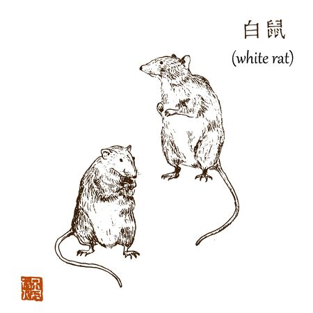 Chinese new year 2020 year of white rat vector illustration. Sketch rats and hieroglyph asian graphic. Hieroglyph says white rat. Isolated on white hand drawn.
