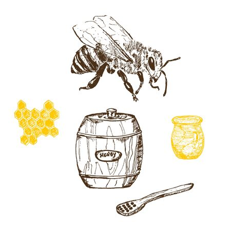 Honey and bee hand drawn sketch elements vector illustration. Honecomb, organic food, barrel of honey from natural bee apiary isolated on white.