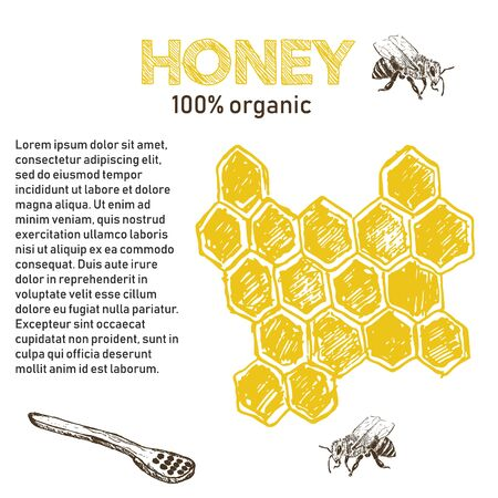 Honey and bee hand drawn sketch elements and text vector illustration. Honecomb, organic food, barrel of honey from natural bee apiary isolated on white.