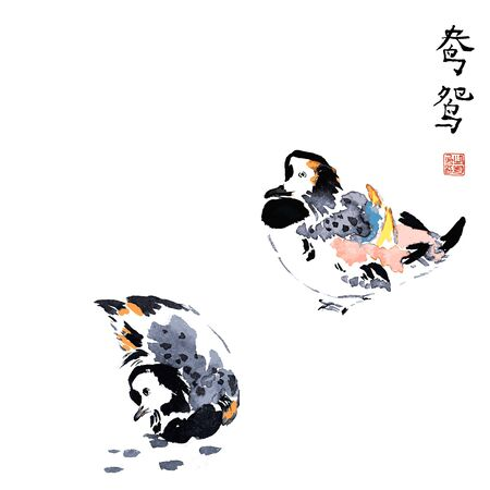 Mandarin ducks swimming traditional chinese ink sketch painting isolated vector illustration.