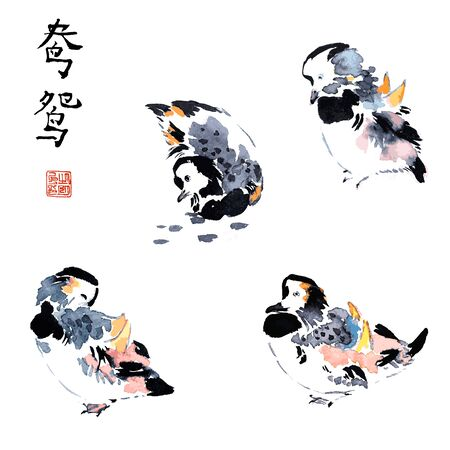 Mandarin ducks birds in different poses traditional chinese ink sketch painting isolated vector illustration.